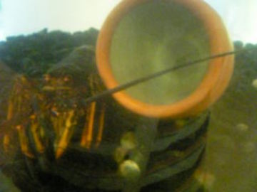 Image689